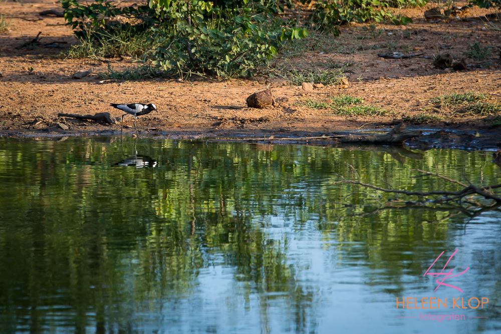Watervogel tijdens fotosafari zuid-afrika